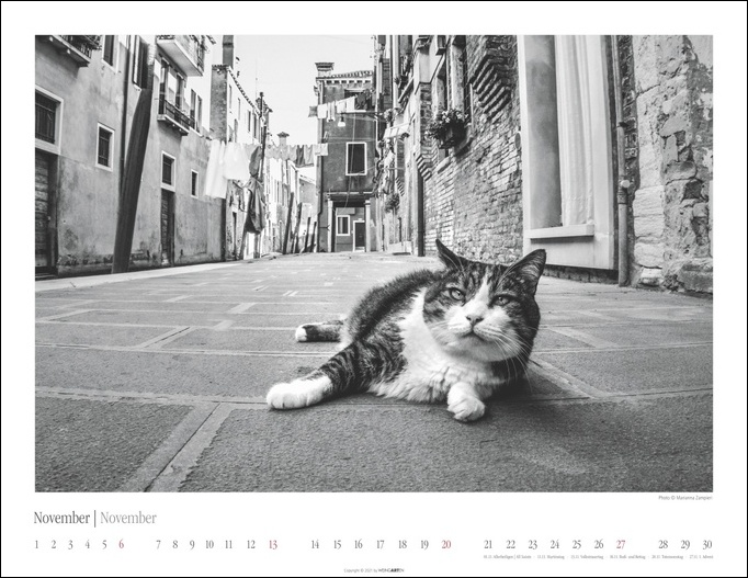 Venedig und die Katzen Kalender 2022