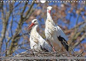 Zu Gast bei Familie Storch (Wandkalender 2022 DIN A4 quer)