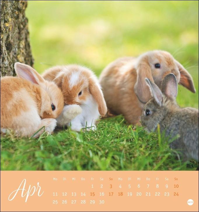 Süße Kaninchen Postkartenkalender 2022