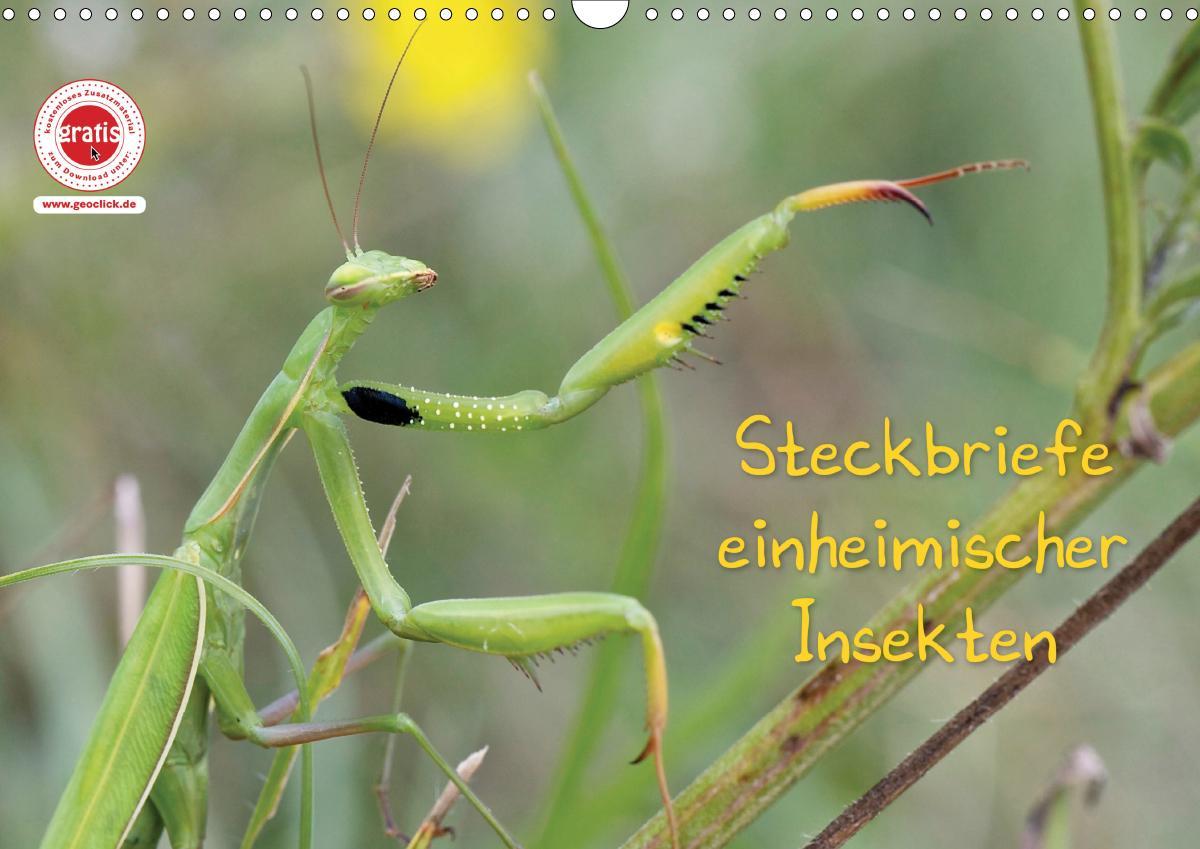 GEOclick Lernkalender: Insekten (Wandkalender 2021 DIN A3 quer)