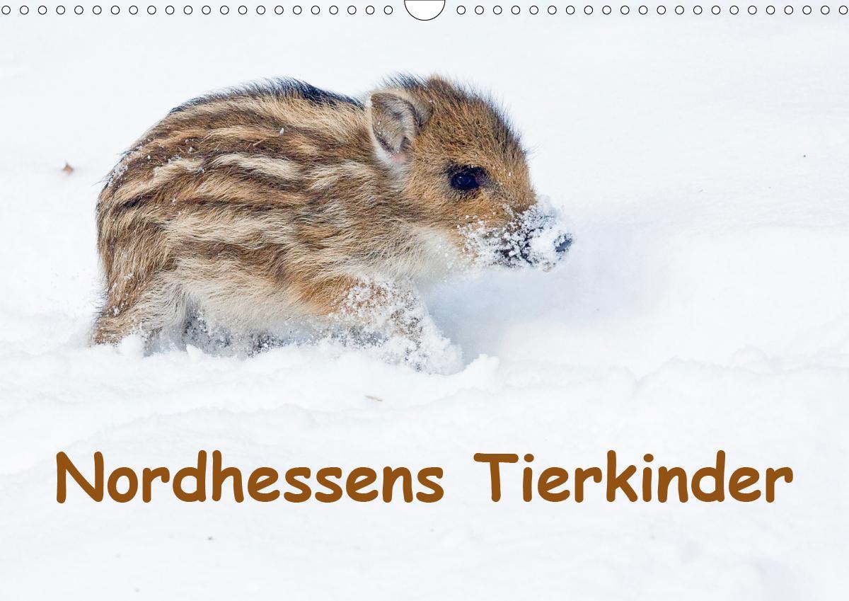 Nordhessens Tierkinder (Wandkalender 2021 DIN A3 quer)
