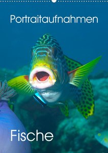 Portraitaufnahmen - Fische (Wandkalender 2021 DIN A2 hoch)
