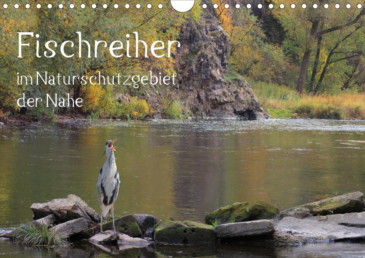 Der Fischreiher im Naturschutzgebiet der Nahe (Wandkalender 2021