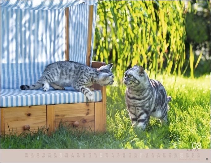 Wegler Katzenkalender 2022