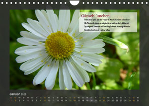 Outdoor-Survival-Kalender (Wandkalender 2022 DIN A4 quer)