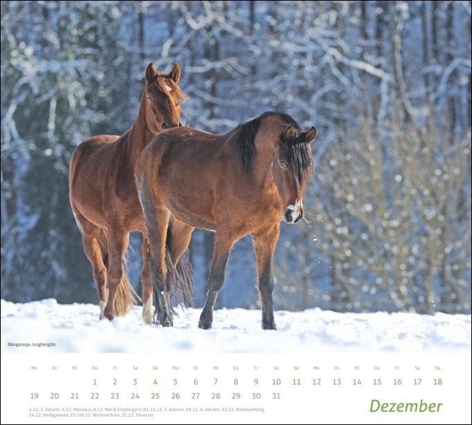 times&more Pferde Bildkalender 2022