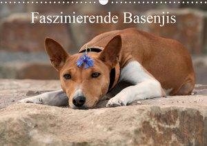 Faszinierende Basenjis (Wandkalender 2021 DIN A3 quer)