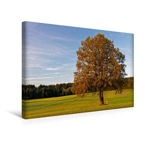 Premium Textil-Leinwand 45 cm x 30 cm quer Herbstwiese nahe Neuschönau