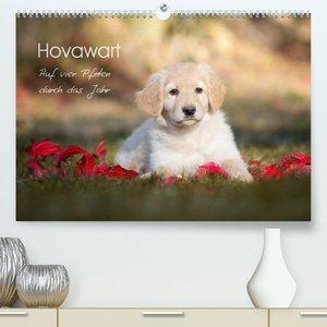 Hovawart - Auf vier Pfoten durch das Jahr (Premium, hochwertiger DIN A2 Wandkalender 2022, Kunstdruck in Hochglanz)