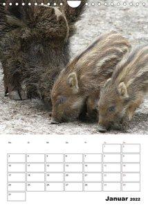 Der wildschweinische Terminplaner (Wandkalender 2022 DIN A4 hoch)
