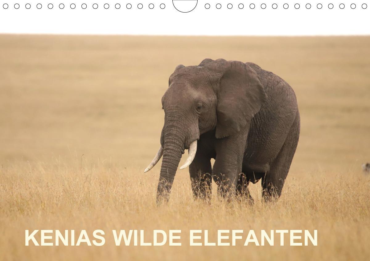Kenias wilde Elefanten (Wandkalender 2021 DIN A4 quer)