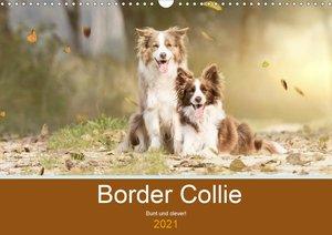 Border Collie - Bunt und clever! (Wandkalender 2021 DIN A3 quer)
