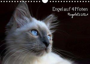 Engel auf 4 Pfoten - Ragdolls 2021 (Wandkalender 2021 DIN A4 que