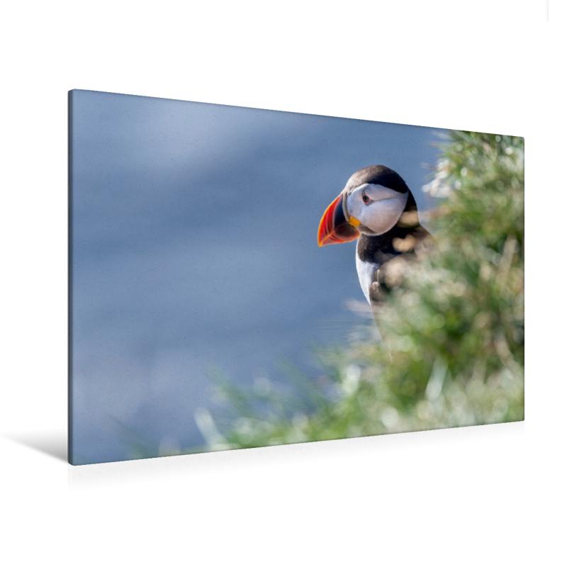 Premium Textil-Leinwand 120 cm x 80 cm quer Papageitaucher (Puff
