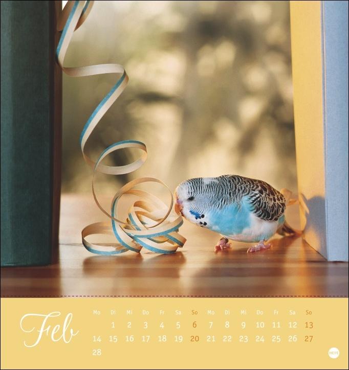 Freche Wellensittiche Postkartenkalender 2022