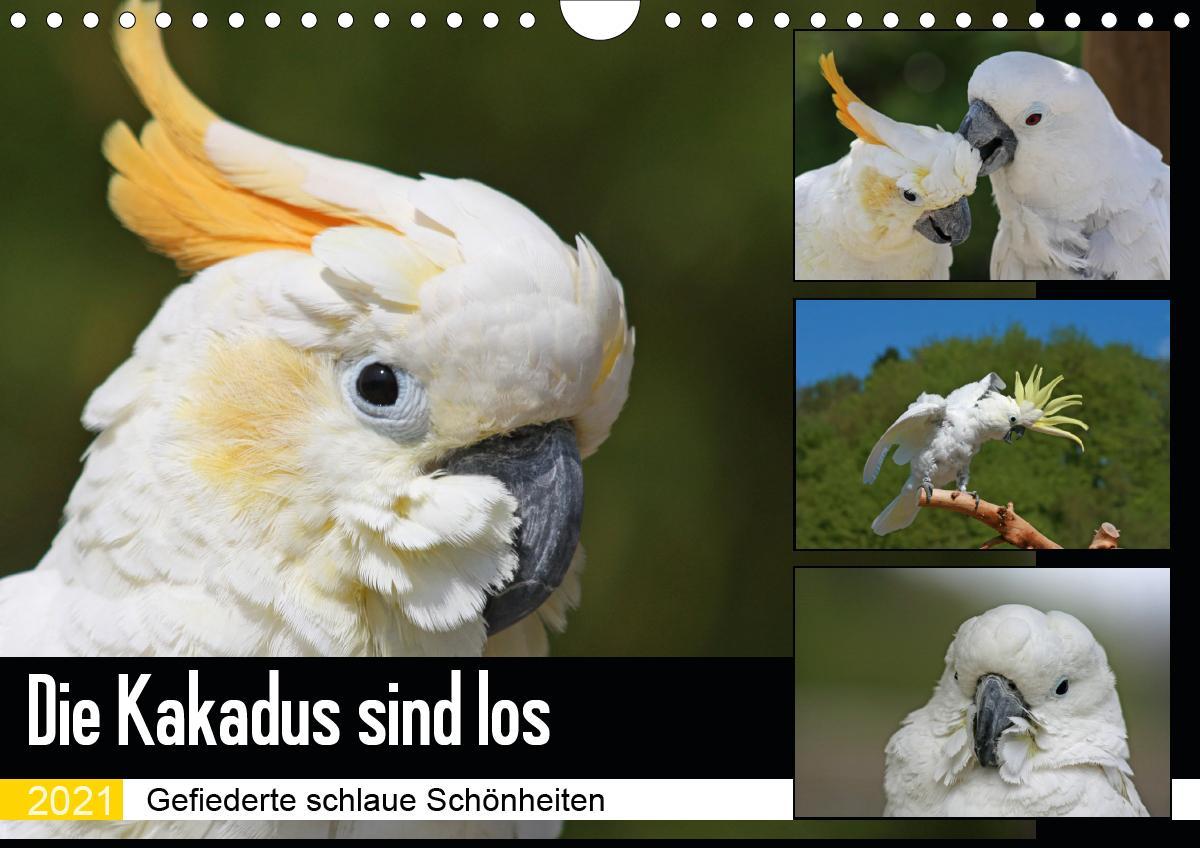 Die Kakadus sind los (Wandkalender 2021 DIN A4 quer)