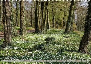 Münsterland - Vielfältige Schönheit (Wandkalender 2022 DIN A2 quer)
