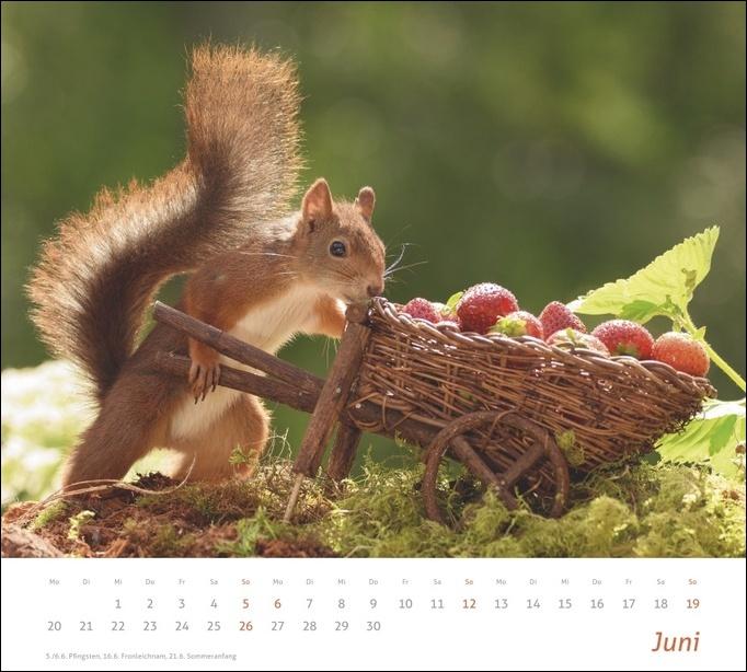 times&more Eichhörnchen Bildkalender 2022