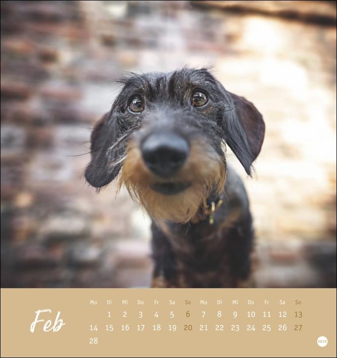 Dackel Postkartenkalender 2022