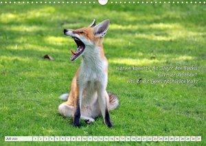 Freche Füchse - lustige Sprüche (Wandkalender 2022 DIN A3 quer)