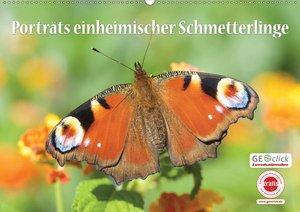 GEOclick Lernkalender: Porträts einheimischer Schmetterlinge (Wandkalender 2021 DIN A2 quer)