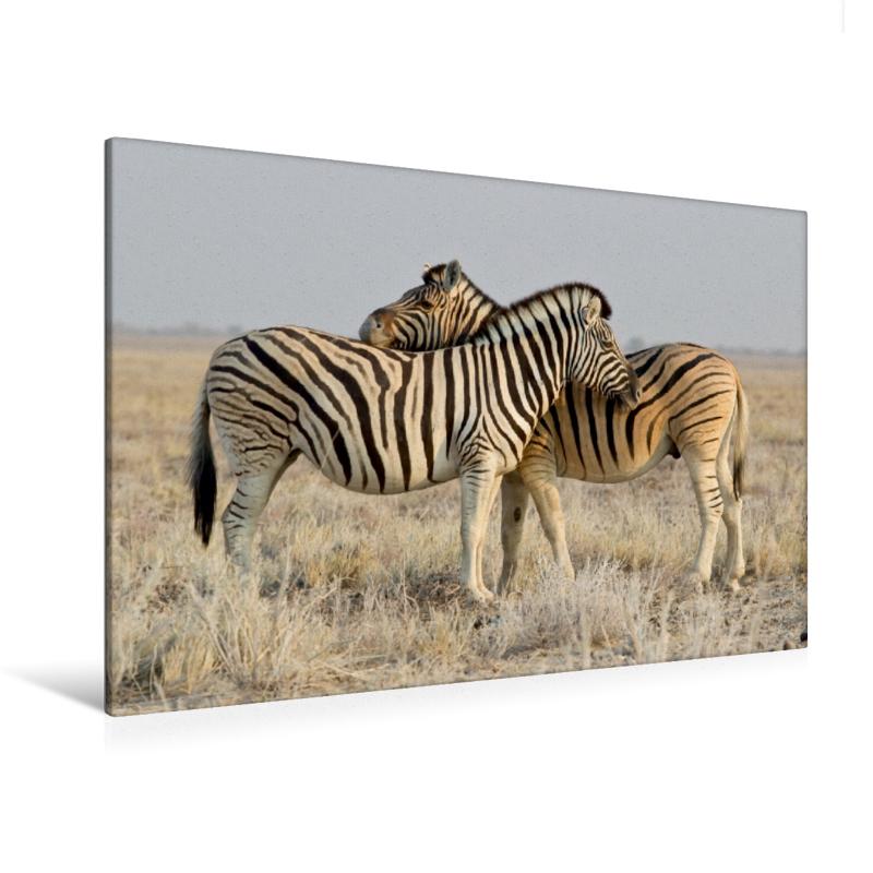 Premium Textil-Leinwand 120 cm x 80 cm quer Zebras
