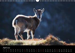 BERNER ALPEN - Natur und Landschaften (Wandkalender 2022 DIN A3 quer)