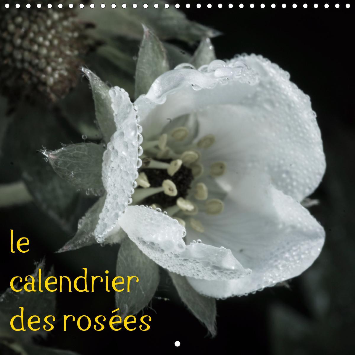 le calendrier des rosées (Calendrier mural 2021 300 × 300 mm Squ