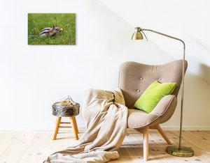 Premium Textil-Leinwand 45 cm x 30 cm quer Goldmantelziesel im J