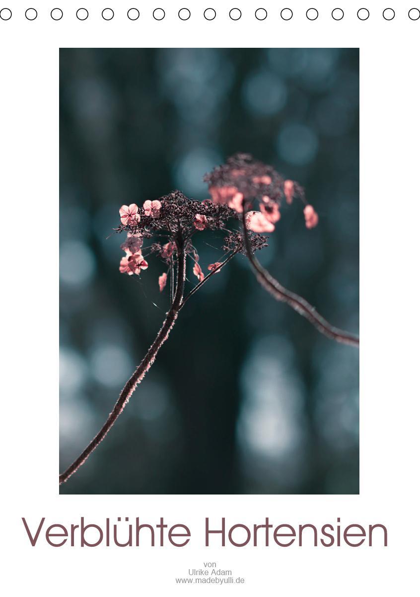 Verblühte Hortensien (Tischkalender 2021 DIN A5 hoch)