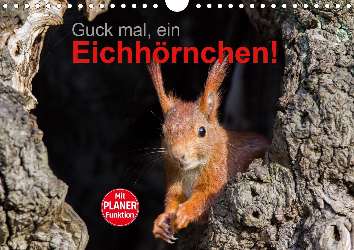 Guck mal, ein Eichhörnchen! (Wandkalender 2021 DIN A4 quer)