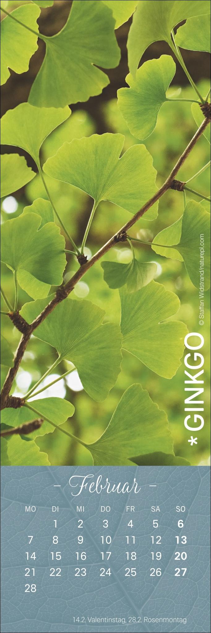 Blätter Lesezeichen & Kalender 2022