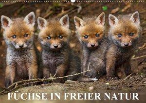 Füchse in freier Natur (Wandkalender 2021 DIN A2 quer)