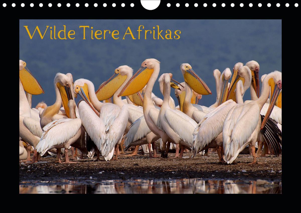 Wilde Tiere Afrikas (Wandkalender 2021 DIN A4 quer)