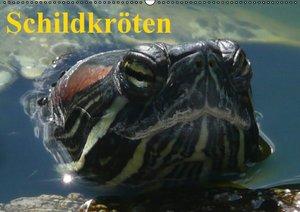 Schildkröten (Wandkalender immerwährend DIN A2 quer)