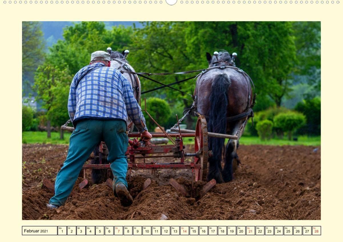 Arbeitspferde - Alltag des belgischen Kaltbluts (Wandkalender 20
