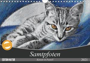 Samtpfoten - Katzen in Pastell (Wandkalender 2021 DIN A4 quer)
