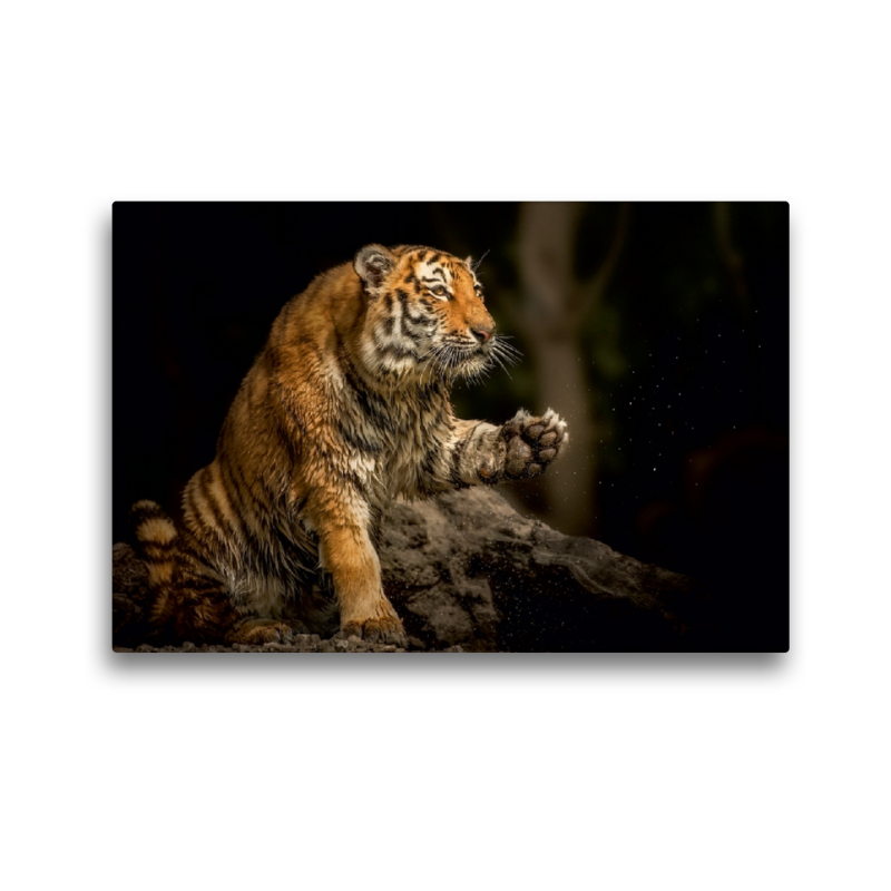 Premium Textil-Leinwand 45 cm x 30 cm quer Tiger