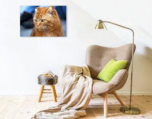 Premium Textil-Leinwand 75 cm x 50 cm quer Hauskater Felix ist e