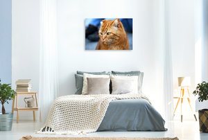 Premium Textil-Leinwand 90 cm x 60 cm quer Hauskater Felix ist e