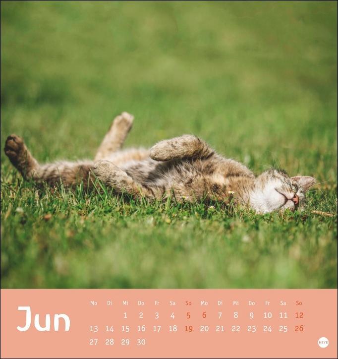 Tierisch entspannte Katzen Postkartenkalender 2022