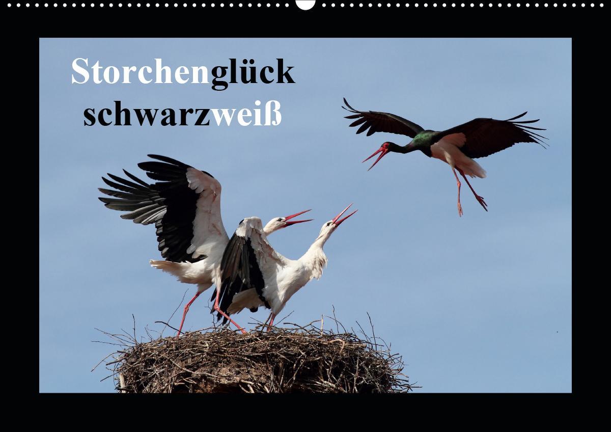 Storchenglück schwarzweiß (Wandkalender 2021 DIN A2 quer)
