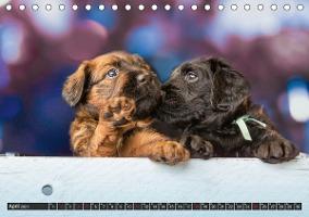 Briard-Welpen - Knuddelbären zum Verlieben (Tischkalender 2021 D