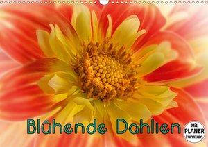 Blühende Dahlien (Wandkalender 2021 DIN A3 quer)