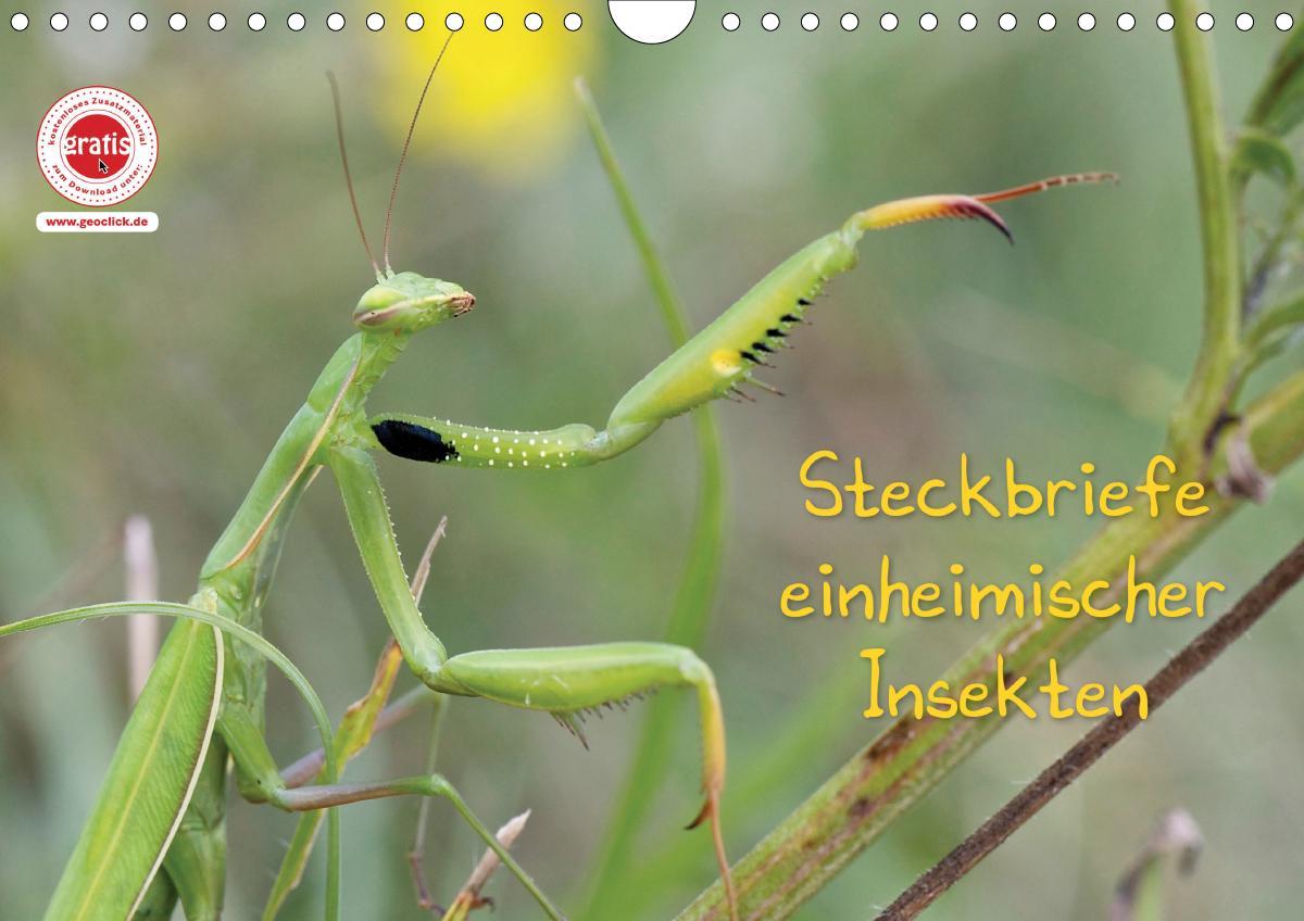 GEOclick Lernkalender: Insekten (Wandkalender 2021 DIN A4 quer)