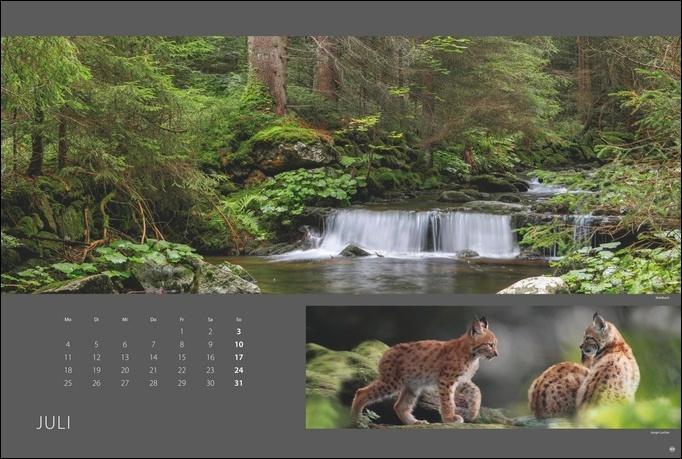 Wald nah und fern Edition Kalender 2022