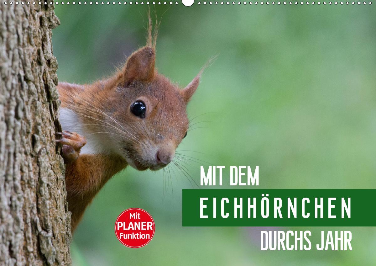 Mit dem Eichhörnchen durchs Jahr (Wandkalender 2021 DIN A2 quer)