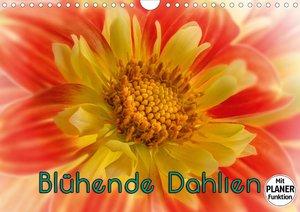 Blühende Dahlien (Wandkalender 2021 DIN A4 quer)