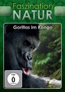 Gorillas im Kongo, 1 DVD