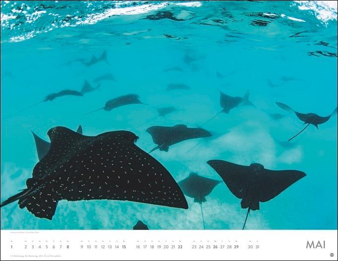 Unterwasser Posterkalender 2022
